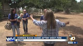 Horses back home after West Fire