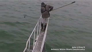 White shark jumps out of water to attack man - Video