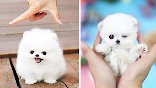 Cute Puppies Cute Funny and Smart Dogs Compilation 3 Cute Buddy_1080p
