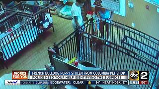 Puppy stolen from Columbia pet shop is returned - Video
