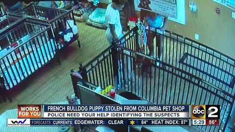 Puppy stolen from Columbia pet shop is returned