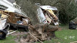 Tree smashes into Pasco Co. home, trapping elderly woman