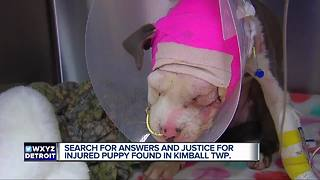 Search for answers after dog found injured - Video