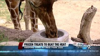 Frozen treats keep animals cool during summer heat - Video