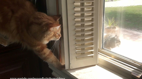 Stealthy Cat Tries To Intimidate Fearless Squirrel And Fails