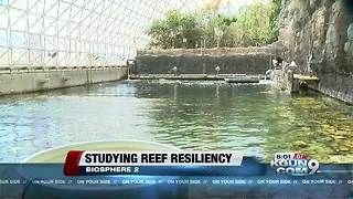 Biosphere 2 ready to help save reefs - Video