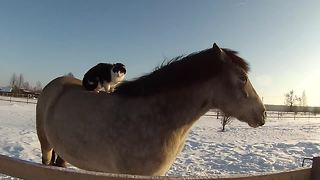 Super chill cat rides on the back of horse friend - Video