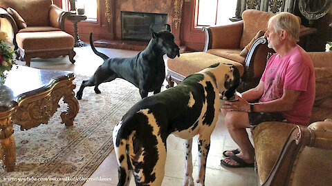 Funny Great Dane Can't Wait To Clean Up Dog's Breakfast Bowl
