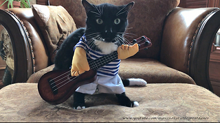Hilarious Cat Sings in His Halloween Guitarist Costume  - Video
