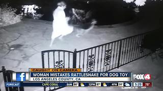 Woman mistakes snake for dog toy - Video