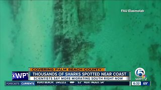 Shark migrations spotted offshore in Palm Beach County