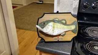 Animatronic 'Billy Bass the Fish' Vacuums - Video