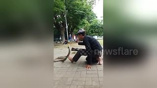 Man trains king cobra at 'Cobra Academy' in Indonesia - Video