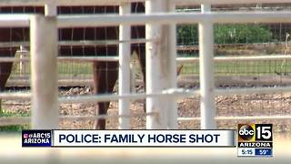 Police seeking information after horse shot, killed in Gilbert - Video