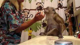 This Monkey Loves Getting Dolled Up - Video