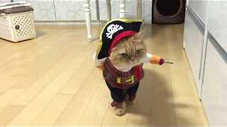 Pirate Cat! - Video