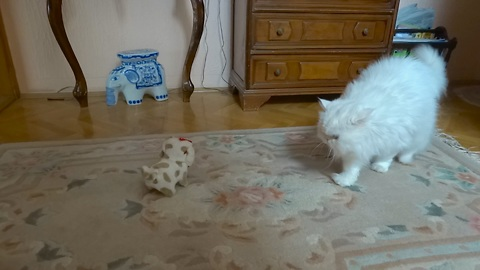 Snowflake the Cat meets a new friend - the robot puppy!