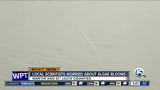 South Florida scientists worry about algae blooms