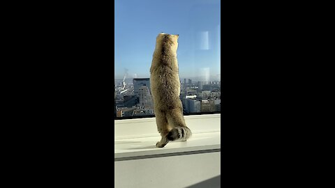 Cat catches a fly on the window of the 22nd floor