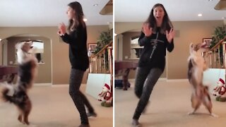 Dancing dog has the best time busting a move with her owner