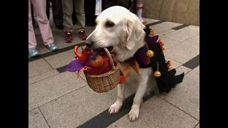 Animals Love Halloween Too - Video