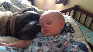Dog Snores Lullaby For Baby As They Both Delve Into Sound Sleep