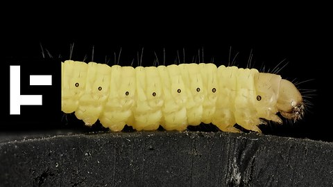 The Little Wax Worm Might Solve Our Great Big Plastic Problem