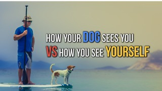 How Your Dog Sees You VS How You See Yourself - Video