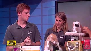 Celebrating National Cat Adoption Month - Video