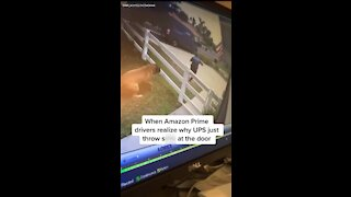 Epic Amazon fail: Delivery driver runs from giant (friendly) dog
