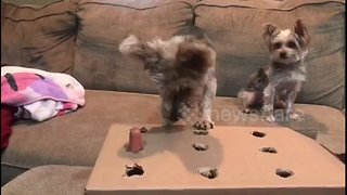 Dog plays 'whack-a-mole' with tasty sausage treats