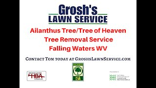 Ailanthus Tree Service Falling Waters WV Landscaping Contractor