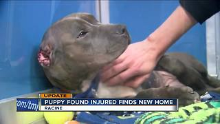 Puppy found with mutilated ears in Racine has new home