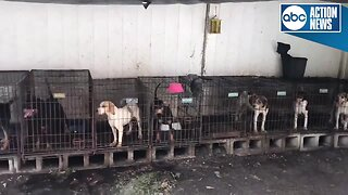 Dogs rescued from hoarding situation