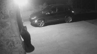 Security camera catches bear breaking into car