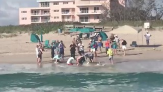 Fishermen Struggle to Release Illegally Caught Hammerhead Shark on Singer Island - Video