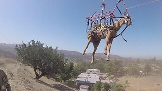 DRAMATIC VIDEO SHOWS HELICOPTER RESCUING HORSE FALLEN DOWN STEEP HILL