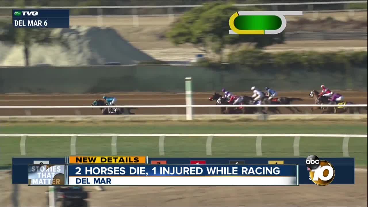 Two horses dead, 1 injured at Del Mar