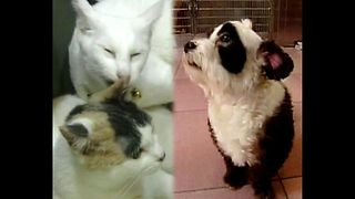 Most Popular Pet: Cats or Dogs? - Video
