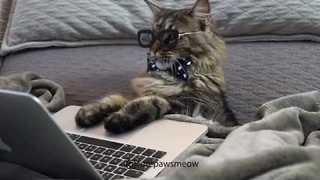 Busy Busy Business Cat Has Important Business - Video