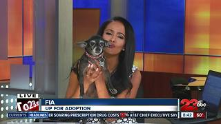 Meet our 23ABC Pet of the Week, Fia! - Video