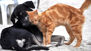 Group proposes taking on animal sheltering for Fort Pierce, St. Lucie County