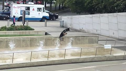 Happiest dog ever plays in water fountain