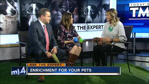 Ask the Expert: Enrichment for your pets