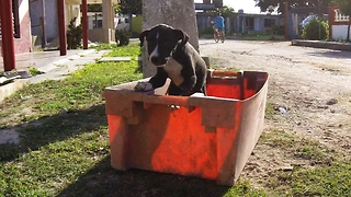 Tourists find stray Cuban puppy in a trash bucket