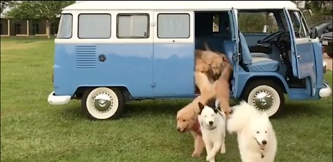 This Might Be Heaven! Army Of Dogs Jumps Out From VW Camper Van