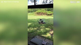 Guy invents remote controlled lawnmower