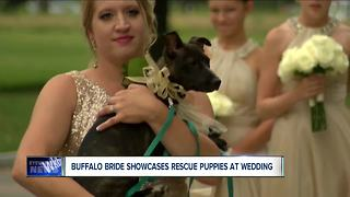 Bridal party pups - Video