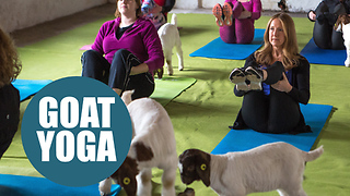 Britain's first class in GOAT pilates - Video