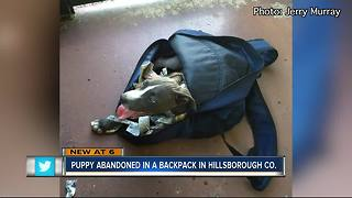 Puppy stuffed in backpack, abandoned in Tampa - Video